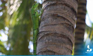 Fauna em Santa Marta